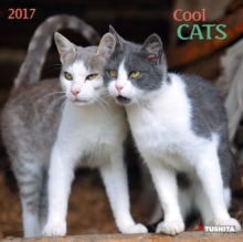 COOL CATS 2017,