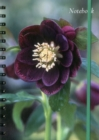 Notebook Hellebore : 128 Page Fine Lined Notebook - Book