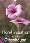 Floral Beauties in the Glasshouse 2019 : Portraits of delicate flowers - Book