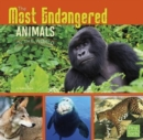 All About Animals: Most Endangered - Book