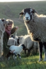 Yorkshire Shepherdess Notebook - Book
