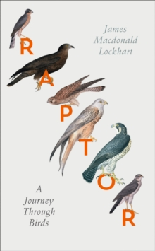 Raptor : A Journey Through Birds, Hardback Book