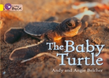 The Baby Turtle, Paperback Book
