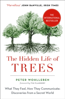 The Hidden Life of Trees : What They Feel, How They Communicate, Paperback / softback Book