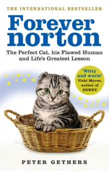 Forever Norton : The Perfect Cat, his Flawed Human and Life's Greatest Lesson, Paperback Book