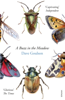 A Buzz in the Meadow, Paperback Book