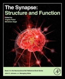 The Synapse : Structure and Function, Hardback Book