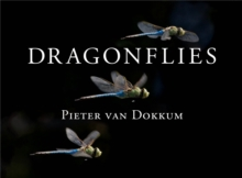 Dragonflies : Magnificent Creatures of Water, Air, and Land, PDF eBook