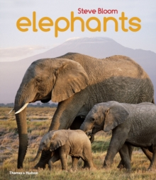 Elephants : A Book for Children, Paperback Book