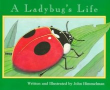 LADYBUGS LIFE A, Paperback Book