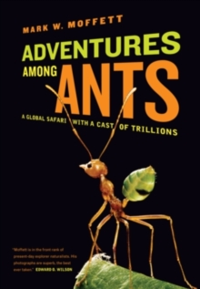 Adventures among Ants : A Global Safari with a Cast of Trillions, Paperback / softback Book
