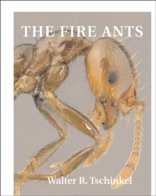 The Fire Ants, Paperback / softback Book