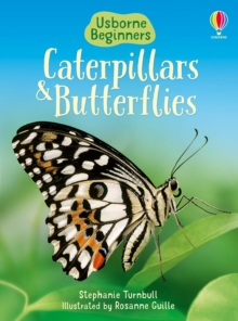 Caterpillars and Butterflies, Hardback Book