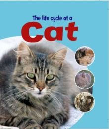 Learning About Life Cycles: The Life Cycle of A Cat, Paperback Book