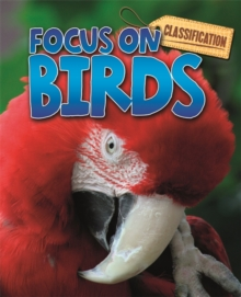 Classification: Focus on: Birds, Paperback / softback Book