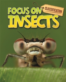Classification: Focus on: Insects, Paperback / softback Book