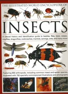 The Illustrated World Encyclopaedia of Insects : A Natural History and Identification Guide to Beetles, Flies, Bees Wasps, Springtails, Mayflies, Stoneflies, Dragonflies, Damselflies, Cockroaches, Man, Hardback Book