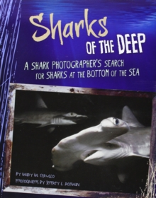 Shark Expedition: Sharks of the Deep, Paperback / softback Book
