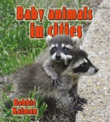 Baby Animals in Cities, Paperback / softback Book