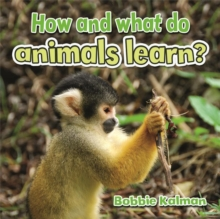 How and What Do Animals Learn - Animals Close-Up, Paperback / softback Book