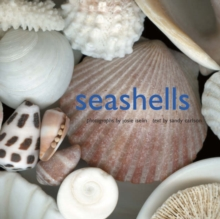 Seashells, Hardback Book