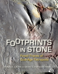 Footprints in Stone : Fossil Traces of Coal-Age Tetrapods, Paperback / softback Book