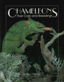 Chameleons : Their Care and Breeding, Paperback Book