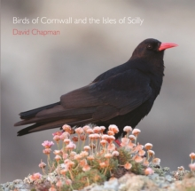 Birds of Cornwall and the Isles of Scilly, Paperback Book