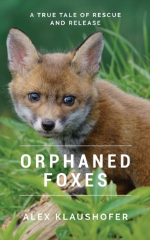 Orphaned Foxes : A true tale of Rescue and Release, Paperback / softback Book