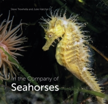 In the Company of Seahorses, Hardback Book