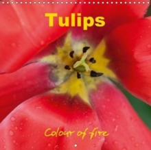 Tulips colour of fire 2019 : The magic of spring blossoms