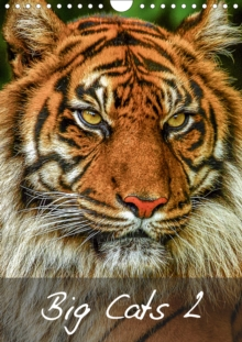 Big Cats2 2020 : Magnificent Felines from around the World, Calendar Book
