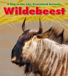 Wildebeest, Hardback Book