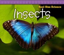 Insects, Paperback Book