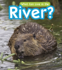 What Can Live in a River?, Hardback Book