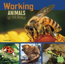Working Animals of the World, Hardback Book