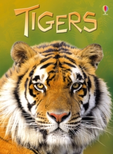 Beginners: Tigers, Hardback Book