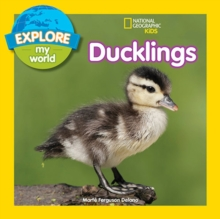 Explore My World: Ducklings, Paperback / softback Book