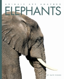 Elephants, Hardback Book