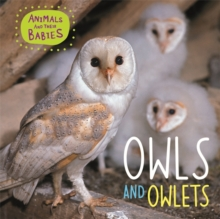 Animals and their Babies: Owls & Owlets, Hardback Book