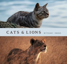 Cats and Lions, Hardback Book
