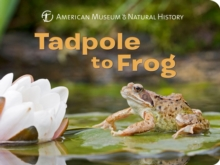 Tadpole to Frog, Board book Book