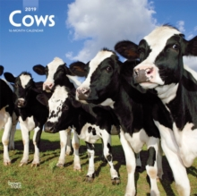 Cows 2019 Square Wall Calendar, Calendar Book