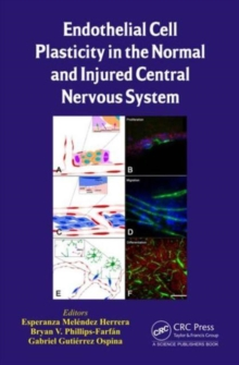 Endothelial Cell Plasticity in the Normal and Injured Central Nervous System, Hardback Book
