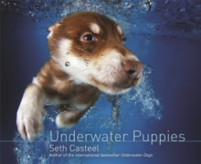 Underwater Puppies, Hardback Book