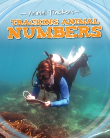 Tracking Animal Numbers, Paperback / softback Book