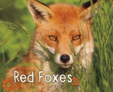 Red Foxes, Hardback Book