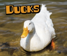 Ducks, Hardback Book