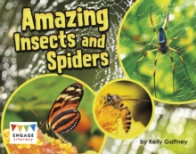Amazing Insects and Spiders, Paperback / softback Book