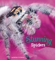 Stunning Spiders, Paperback / softback Book